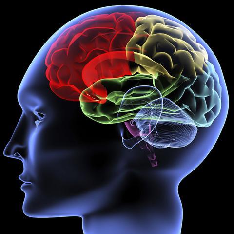 Κι ομως είναι αλήθεια! Δημιουργήθηκε ο πρώτος ανθρώπινος εγκέφαλος εργαστηρίου