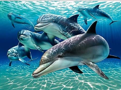 Απίστευτη διαπίστωση: Τα δελφίνια κάνουν μπέιμπι σίτινγκ