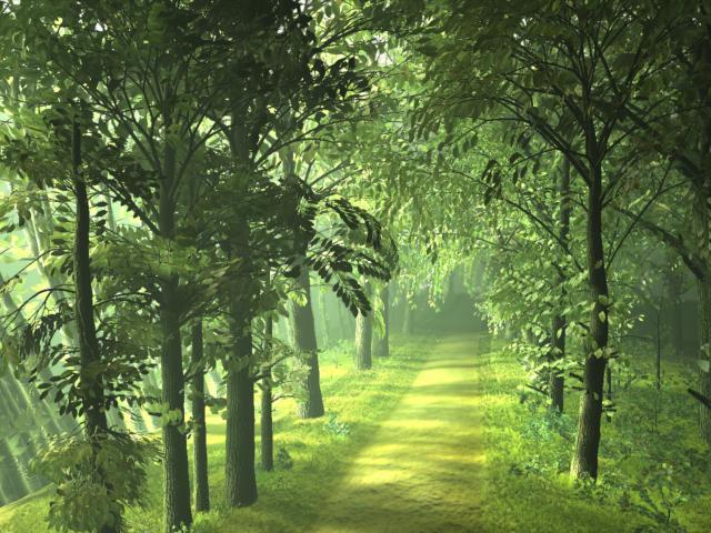 Τα μισά δέντρα του πλανήτη εχει κόψει ο άνθρωπος