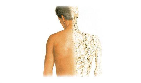 Ένα βήμα πιο κοντά στη θεραπεία της νόσου που μετατρέπει τους μυς σε οστά