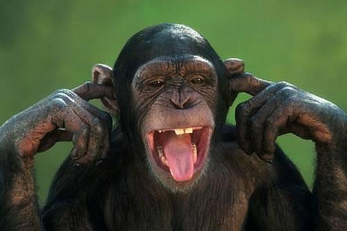Χιμπατζήδες εριξαν την κάμερα από τηλεοπτικό συνεργείο (Βίντεο)