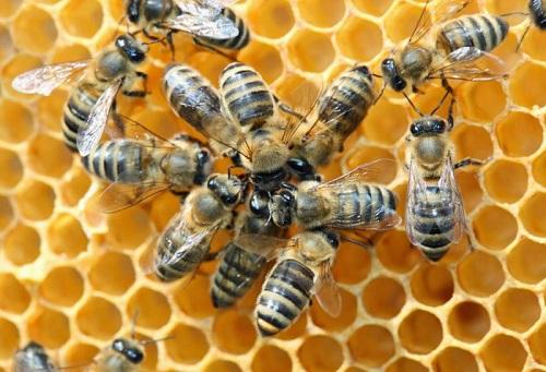 Συναγερμός για τον ιό που εξαφανίζει τις μέλισσες