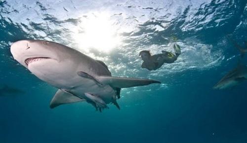 400 χρόνια ζεί ο καρχαρίας της Γροιλανδίας
