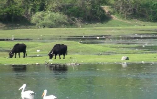 Ο υπέροχος υδροβιότοπος της λίμνης Κερκίνης