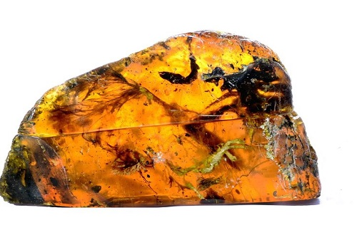 Βρέθηκε αυτούσιο πτηνό 99 εκατομμυρίων ετών