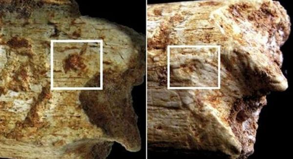 Βρέθηκε σκελετός ανθρώπου 500 χιλ ετών πού είχε τραγικό τέλος