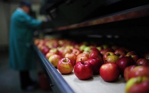 Γενετικά τροποποιημένα μήλα που δεν αποκτούν καφέ χρώμα όταν κόβονται