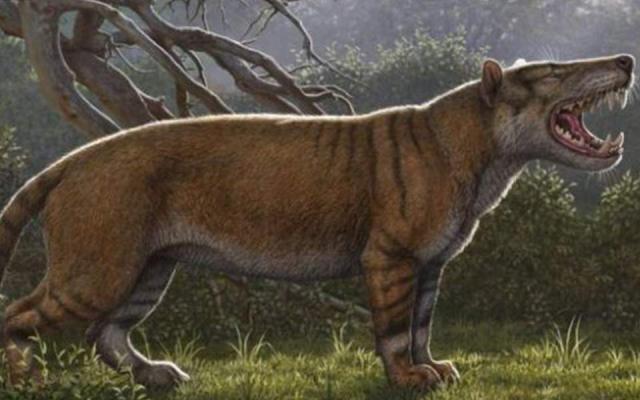 Επιστήμονες ανακάλυψαν το προϊστορικό γιγαντιαίο «μεγάλο αφρικανικό λιοντάρι»